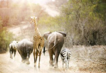 Een unieke vakantie: actief roadtrippen in Zuid-Afrika