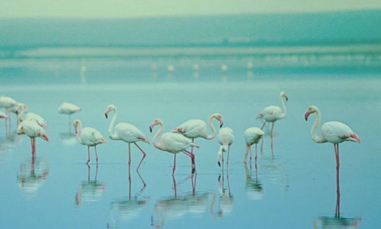 flamingos-spanje-malaga