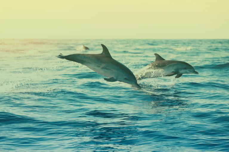 dolfijnen-spotten-portugal