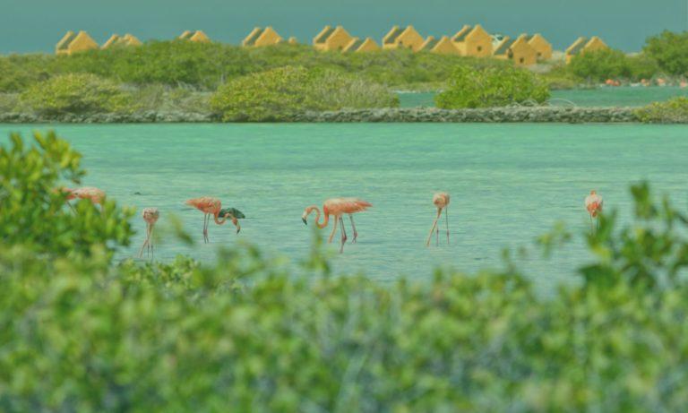 flamingo-pekelmeer-bonaire