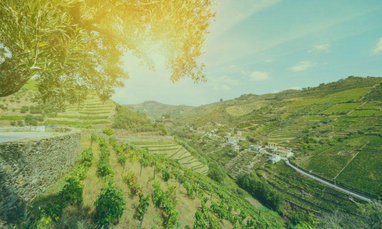 douro-vallei-portugal-4