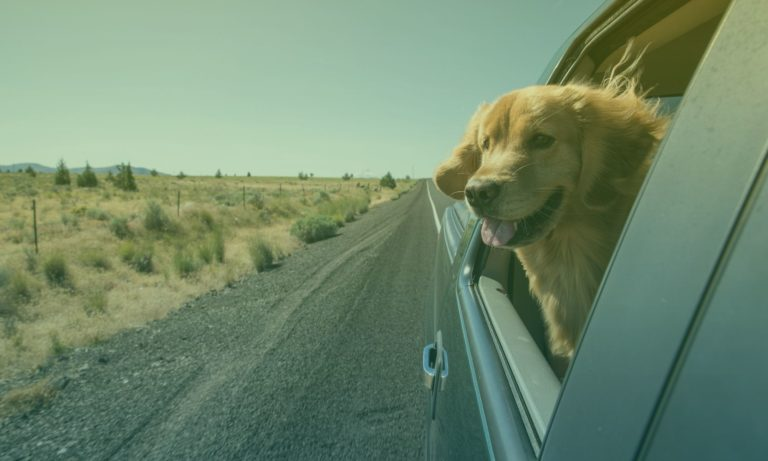 hond-in-auto-5
